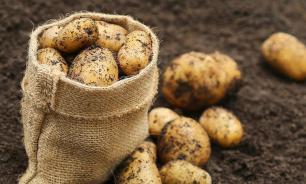 В Австрии перерабатывают картофельную кожуру в биогаз для отопления домов
