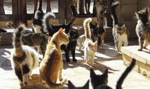 Как домашние кошки покорили весь мир
