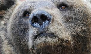 Томский медведь разгромил три дома в поисках варенья