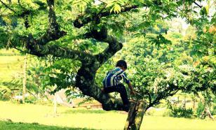 Как вылечить дерево без ущерба для него