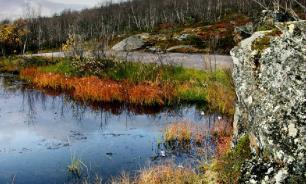 В Староладожском канале может погибнуть рыба