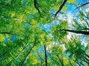 Леса жертвуют собой ради спасения планеты