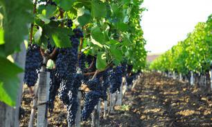 Принадлежащая РПЦ компания получила лицензию на продажу вина