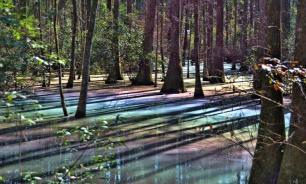 Очень красивое болото нашли в Виргинии