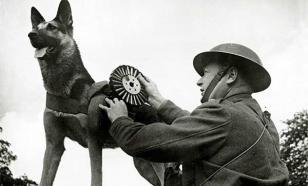 Чем занимались собаки на войне