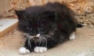 Цыган зверски убил котенка на глазах у ОМОНа