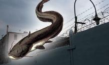 Рыбаки, выловившие гигантского сома под Саратовом, могут сесть в тюрьму