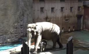 Слоненку, родившемуся в Московском зоопарке, дали имя Филимон