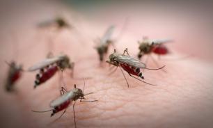 Ученые США смогли заблокировать сигнал голода у комаров