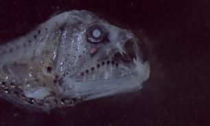 Древние люди питались гигантской рыбой