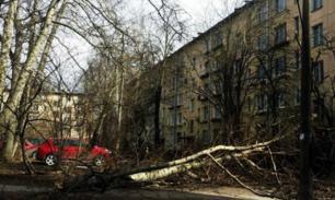 Трое детей пострадали от урагана в Москве