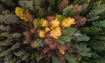Лес в Сибири стал пустыней из одних пней