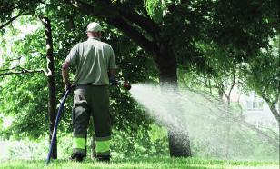 Деревья в саду: правильный полив