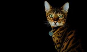 Кошачья агрессия: причины и способы борьбы