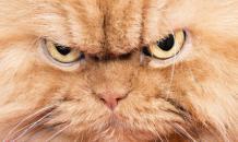 Ни слова хозяину! Кошачьи секреты
