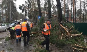 Семнадцать человек пострадали в результате урагана в Москве, погиб ребенок