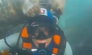 """""""Дружелюбный"""" тюлень чуть не погубил дайвера"""