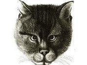 Коты теперь тоже подсудны