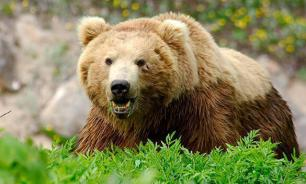 Медведь сорвал учения, напугав тысячи будущих солдат НАТО
