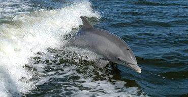 На Гавайях дельфин обратился за помощью к людям
