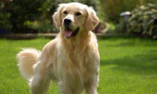Ученые: собаки используют брови для эмоционального влияния на людей