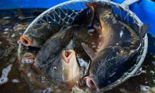 Рыболовный промысел в России проконтролируют отечественные спутники