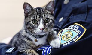 В США котенок официально принят на работу в отдел полиции