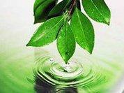 Регионы призвали власть на помощь экологии