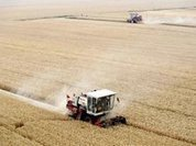 Зерно надежды российских аграриев