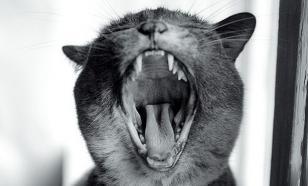 ИГ готовит юных смертниц с помощью кошек