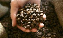 Ученые установили, что кофеин различно действует на организм человека