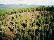 Найдены обломки тунгусского метеорита