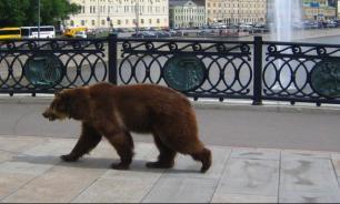 Медведи заставят людей убирать мусор
