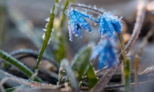 В Гидрометцентре рассказали о заморозках в Архангельске и Карелии