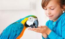 Домашние попугаи: советы по выбору