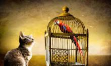 Кому невыгоден закон о животных?
