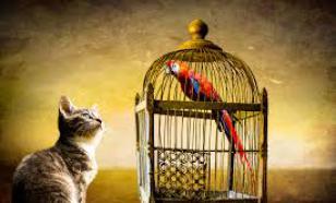 Бурматов: Кому невыгоден закон о животных