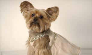 Одежда для собак: история возникновения собачьей моды