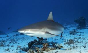 В Австралии на мужчину напала акула