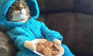 Посольство США по ошибке разослало всем кота в пижаме