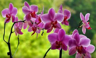Семь ошибок в уходе за орхидеями