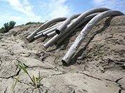 Угрожающая Калифорнии засуха заставляет жителей воровать воду у соседей