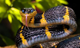 МЧС дало рекомендации по защите от змеиных укусов