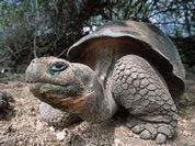 Гигантские черепахи спасли хурму