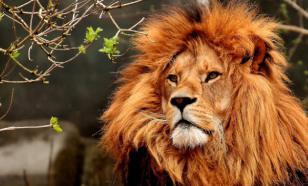 Зоопарки отнесли к пострадавшим от коронавируса отраслям