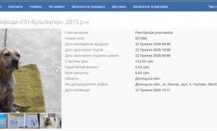 Собаку украинца продадут за долги