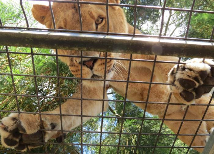 Мужчина отказался работать в зоопарке и получил пять суток ареста