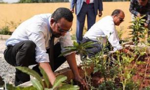 В Эфиопии за год посадили почти 4 млрд деревьев