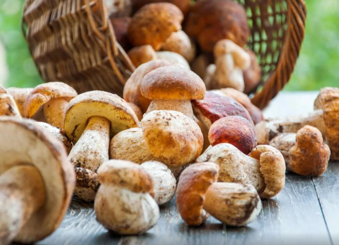 Почему гриб можно и срывать, и срезать
