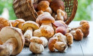Мельница мифов: хоть режь гриб, хоть рви